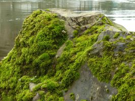Rock Moss by DanikaMilles
