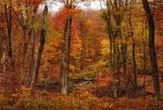 Colors of autumn by ohlopkov