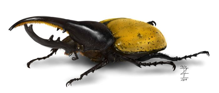 Insect Practice - Hercules Beetle by ImanuelViczzz