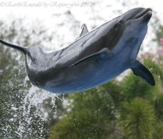 Flying Dolphin by EarthEmerald