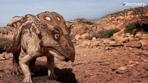 Baby Protoceratops from DR by Swordlord3d