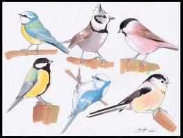 Europeen Paridae - Tits by be-a-sin
