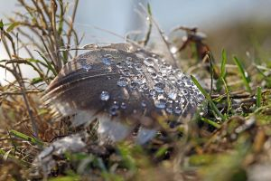 Dew-drops on a feather by Betuwefotograaf