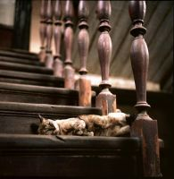 Cat By The Stairs by panuraj