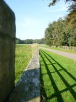Fence Line by caelandrake