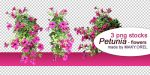 PNG STOCK SET: Petunia flower 1 by MAKY-OREL