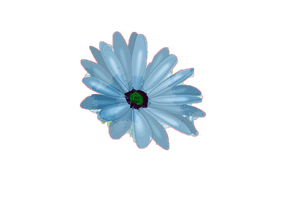 Flor png by XLarii