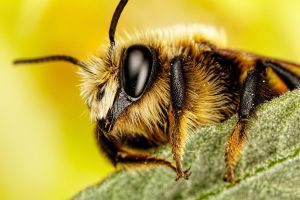 Mason Bee Series 3-1 by dalantech