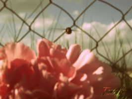 A Bee Over the Carnation. by mylovelybliss