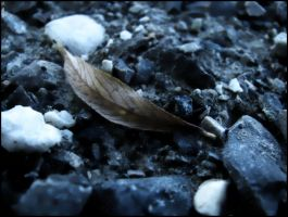 Leaf in cold by unusualPhoto