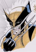 The Wolverine by samrogers