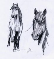 pencil horses by blackseagull