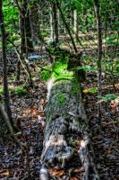 Old Moss Covered Log by tracykenefick