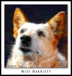 Miss Harriett by KLR620