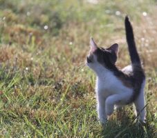 Never Look Back by Auf-Kurs
