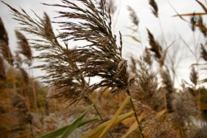 Long Grass in the Fall by nwalter
