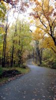 A Serpentine Trail in Autumn Woods by wanderingmage