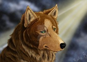 A brown wolf... by pienisusi
