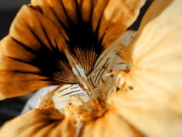 Flower photoshopped by Andrew555