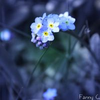 Petites bleues by B-ulle