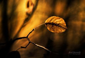 Golden Light by Nitrok