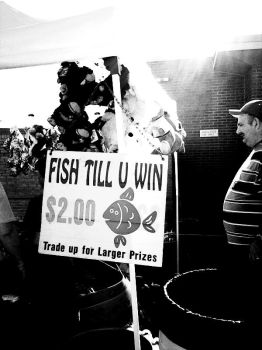 Fish Till U Win by Anabell