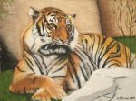Tiger in Pastel by geraden22