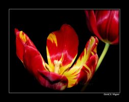 For Susanne by David-A-Wagner