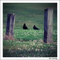 The Crowing by MollyMartin