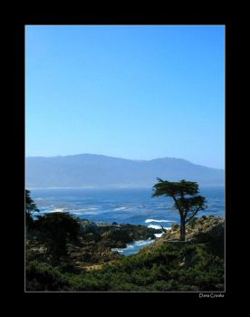 The Lone Cypress by DaRkAnG3L99