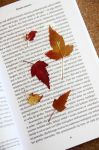 leaf bookmark by Tylek