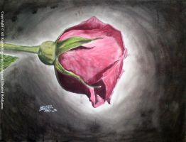 Red Rose by artmeb