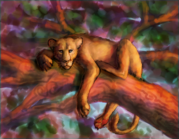 lioness by teacup-elbows