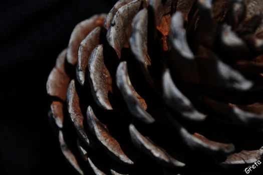 Pine Cone by Chirpilittle
