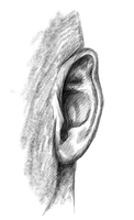 Ear Study - MyPaint by Gemneroth