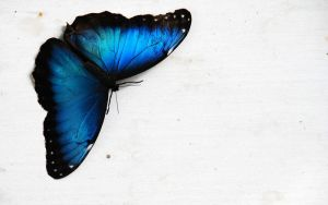 ButterFly Blue HD by stavsap