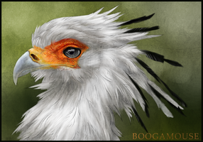 Secretary Bird by BoogaMouse