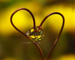 love the flower by sinanTR