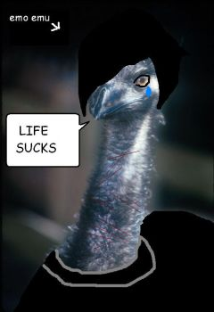 the emo emu by Its-A-Hard-Life