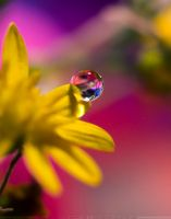 Once upon a drop... by SheilaBrinson