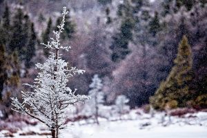 Light Snow and an Icy Tree by Witch-Dr-Tim