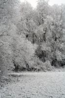 winterland 29 by priesteres-stock