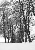 winter by cymetic-photos