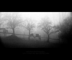 Horses in the mist by Rosse-San