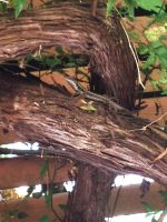Baby Lizard in Tree by Megalomaniacaly