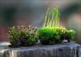 A Touch Of Moss 1 by Firey-Sunset