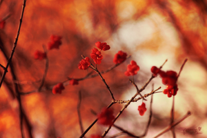 red autumn love by Blanchii