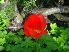 Red Flower by xDNarnian