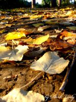 Day in autumn by Alissia666