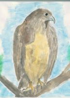 Eagle in water color -- by Zerkatres